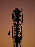 Tower with storks Stock Photography
