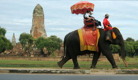 Tower of a temple in Ayutthaya on the background of a colorful walking elephant Stock Photos
