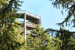 Tower of The trail trees Lipno Lookout. Behind pine trees in Czech Republic Stock Photography