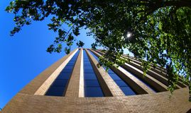 Tower through the trees. The US Bank tower in Boise, ID Royalty Free Stock Photography