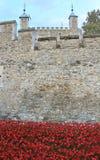 Tower von London mit Mohnblumen Stockbild