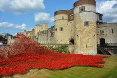 Tower von London Mohnblumen Lizenzfreie Stockfotos