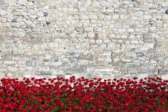 Tower von London und Mohnblumen Stockbild