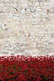 Tower von London und Mohnblumen Lizenzfreies Stockbild