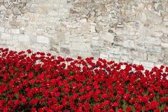 Tower von London und Mohnblumen Lizenzfreie Stockfotografie