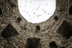 Tower wall and flock of birds Stock Photography