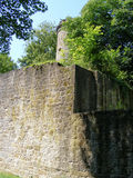 Tower and wall of old German castle. Between trees Stock Image