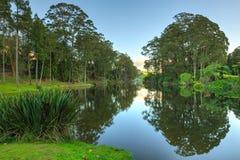 Towering деревья евкалипта отразили в стекловидных водах озера стоковое изображение