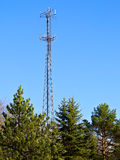 Towering Above the Trees Stock Images