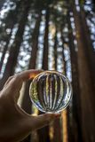 Tall Giant Redwood Forest Trees Captured in Glass Ball Held in F. Towering Giant Sequoia Redwood Trees captured in glass ball held in hand with lines of trunks stock photos