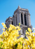 Towers of Notre-Dame cathedral through yellow flowers Royalty Free Stock Images