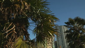 Towers  and Palm Trees, Vancouver stock footage