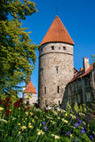 Towers of Tallinn. Estonia Stock Photos