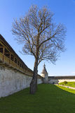 Towers and walls of the Pskov fortress, Russia. Linden tree near wall of the Pskov Kremlin royalty free stock image