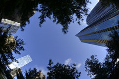 Town Buildings Skyscrapers Urban Park Trees Royalty Free Stock Image