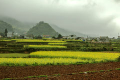 Town and Canola field landscape Stock Photo