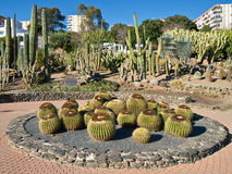 Town Centre Cactus Garden Spain. Cactus garden with a variety of species of cacti in a town centre in a seaside resort in Spain. Paloma Park in Benalmadena Costa royalty free stock photos