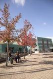 Town hall of wijk bij duurstede Royalty Free Stock Photo
