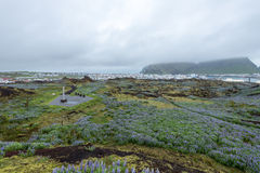 Town of Heimaey, Westman Islands, Iceland Stock Image