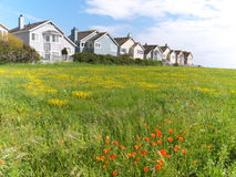 Town houses on green meadow. Houses ligned up with beautiful green meadow in front. Blue sky clouds , and shrubs in front. Yellow and red flowers bloom, typical Royalty Free Stock Photography