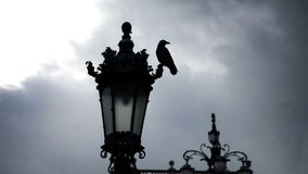 Town near sea in Italy and street lamp with a pigeon stock footage