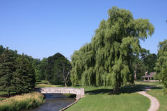 Town Park. Large Weeping Willow Tree In Town Park Royalty Free Stock Photo