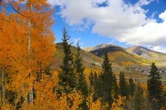 Town of Silverton in Colorado Rocky Mountains in autumn. Colorful aspen trees and leaves falling in autumn near Silverton, Colorado in the Rocky Mountains Stock Photos