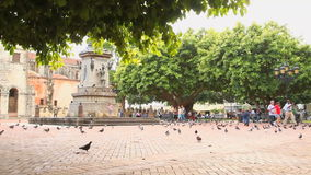 Town Square with Pigeons stock video