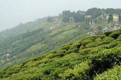 Town and Tea Garden Royalty Free Stock Photos