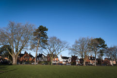 Town trees in winter Stock Images
