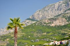 Palm tree with high croatian mountain Biokovo Stock Photography