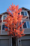 Townhouse Condominiums with Autumn Foliage Royalty Free Stock Photography