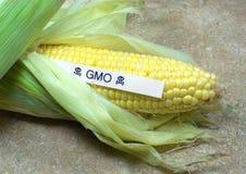 Toxic Corn. GMO corn disguised as organic corn Royalty Free Stock Photos