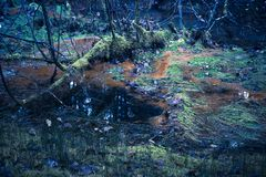 Toxic Forest Swamp. Rust colored water in a forest swamp with coloration added for a strange look royalty free stock images