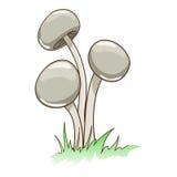 Toxic mushrooms vector illustration Stock Image