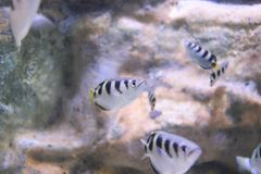 Toxotidae immagine stock libera da diritti