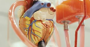Toy anatomical functioning robotic human heart model with circulated liquid. Toy anatomical functioning robotic human heart model with circulated red liquid stock footage