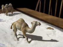 Toy animal camels walking in sand  Royalty Free Stock Photo