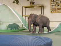 Toy animal elephants on a ping pong table Stock Photography