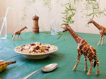 Toy animal giraffes have breakfast Royalty Free Stock Photo