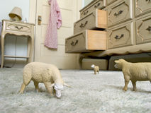 Toy animal sheep graze on a carpet Royalty Free Stock Photography