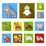 Toy animals flat icons in set collection for design. Bird, predator and herbivore vector symbol stock web illustration. Toy animals flat icons in set collection Royalty Free Stock Photos