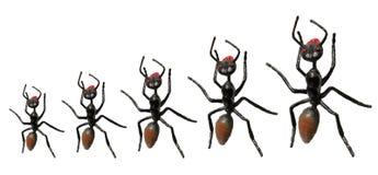 Toy Ants Stock Photo