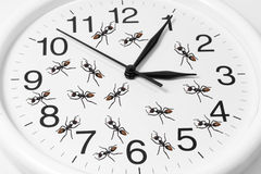 Toy Ants on Clock Royalty Free Stock Image