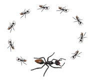 Toy Ants Royalty Free Stock Images