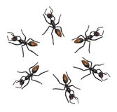 Toy Ants Stock Image