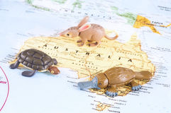 Toy Australian animals on map Stock Images