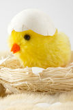 Toy baby chicken with eggshell Royalty Free Stock Photography