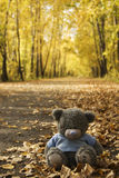 Toy Bear in the autumn. Avenue Stock Photos