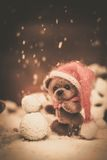 Toy bear in Christmas still life Royalty Free Stock Images